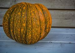 2018 - photo 293 of 365 - vineyard pumpkin (old_hippy1948) Tags: pumpkin bench
