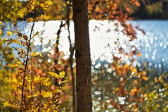 Sunny day (Stefano Rugolo) Tags: stefanorugolo pentax k5 pentaxk5 helios44258mmf2 helios442 helios m42 ricohimaging sunny day sunnyday wood forest trees foliage bokeh autumn bythelake lakeside lake water shimmer colors fall depthoffield dof tree manualfocuslens manualfocus manual vintageprimelens vintagelens primelens