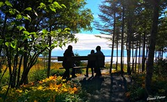 Regard vers la mer. (donaldpoirier93@yahoo.fr) Tags: mer contrejour paysage automne arbres ciel cielbleu épinettes sapin personnage personne iphonese