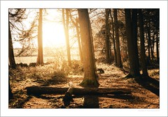Shillito Wood (G. Postlethwaite esq.) Tags: curbaredge derbyshire shillitowood drystonewall fields grass landscape outdoor photoborder trees winter