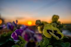 Weardale (tonguedevil) Tags: landscape outdoor view garden plants foliage flowers sun sunrise sky colour light village hill end bollihope weardale