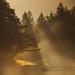 Morning autumn mist