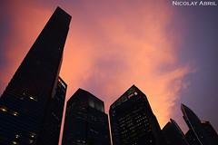 Singapore's Skyscrapers at Sunset (Nicolay Abril) Tags: singapore singapura 新加坡 சிங்கப்பூர் singapur singapour सिंगापुर marinaboulevard marinabayfinancialcentre financialcentre nightphotography fotografíanocturna fotografiadinotte photographiedenuit noche nuit night 夜、夜の写真 cityscape urbanscape cityview 都市風景 都市景観 街の景色 skyscrapers skyscraper небоскребы небоскреб gratteciel rascacielo rascacielos 超高層ビル 建物 sunset coucherdusoleil atardecer puestadelsol tramonto tramonti sunsets atardeceres sonnenuntergang matahariterbenam சூரியஅஸ்தமனம் 日落 pinksunset sunsetcolors pencakarlangit வானளாவிய 摩天大樓 剪影 siluet ஓவியம் silhouettes sunsetclouds clouds nubes nuages மேகங்கள் 雲 awan pinkclouds lowangle contrapicado 夜間攝影 晚上 malamfotografi malam இரவுபுகைப்படம் இரவு