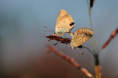 san francesco (@5imonapol) Tags: butterfly love october macro foliage life fall autumn sex
