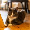 Javacats14Oct2018278.jpg