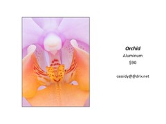 "Orchid • <a style=""font-size:0.8em;"" href=""https://www.flickr.com/photos/124378531@N04/45312919132/"" target=""_blank"">View on Flickr</a>"