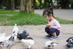 (mrkuti921) Tags: bird children chândung bồcâu bocau chimbocau cau bo câu bồ chim bégái begai