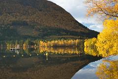 Høstløvet -|- Autumn leafs (erlingsi) Tags: autumn høst herbst volda rotevatnet sunnmøre norway europe raft reflection