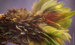 African necklace (Ineke Klaassen) Tags: necklace necklaces feathers veren sieraden sieraad colour colourful color colorful colors colours afrika africa afrikamuseum sony sonyimages sonya6000 sonyalpha sonyalpha6000 sonyilce6000 ilce museum art africanart kunst 25favs 25fav 25faves 2550fav 300views