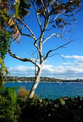 What a view! (autumn_ladybugs) Tags: sydney cbd nsw australia travel tree sea water blue landscape nature sky green greenery hike bushwalk view