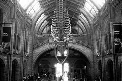 Natural History Museum whale (tercrossman87) Tags: canon p ilford hp5 400 1600 push ilfotec microphen stock home development film plustek 8200i voigtlander 35mm 17 ultron ltm