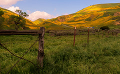 Out of difficulties grow miracles… (ferpectshotz) Tags: carrizoplain carrizoplainnationalmonument hills hillside superbloom flowers spring southerncalifornia sanluisobispocounty wildflower bakersfield wild yellow green carpet sanandreasfault