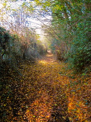 Found this lovely footpath yesterday (petrafluffy) Tags: footpath walk autumn northyorkshire
