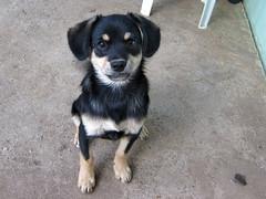 IMG_3107 (Бесплатный фотобанк) Tags: щенок собака пес россия республика крым симферополь