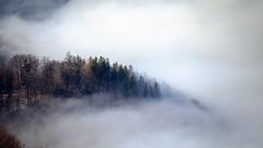 Nebelwald (Rene Wieland) Tags: wald forest nebel mist mountains hike scheibbs mostviertel nature view panorama berge niederösterreich