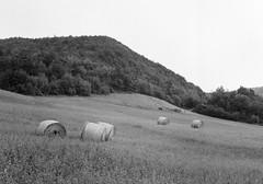 Hay bales 2 (sam.naylor) Tags: italy black white monochrome europe travel medium format film fuji gs645s 645 120 ilford nature farmland farm mountain mountains hills countryside road tree hp5