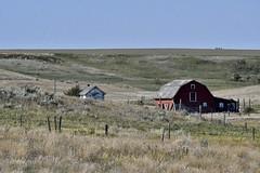 _DSC2426 (barrypphotos) Tags: rural barn southeastern alberta old prairie western