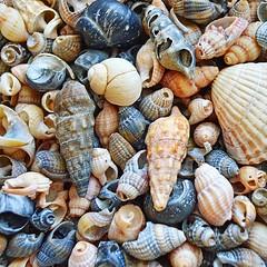 38219807 (aniaerm) Tags: sea coastalfinds sand