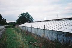 Greenhouse II (kotmariusz) Tags: greenhouse poland szklarnia drzewo przedmieścia suburbs analog 35mm filmphotography olympusom40 fujicolor