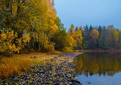 Autumn Lakeshore (bjorbrei) Tags: water lake shore bay trees forest wood autumn fall maridalen maridalsvannet lakemaridal kjelsås oslo norway