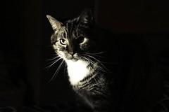 Mickey at sunset (fcruz62) Tags: cat d750 nikon