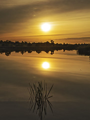 Twin Suns (CraDorPhoto) Tags: canon6d landscape waterscape lake water reflection calm sun sunset golden uk cambridgeshire outdoors nature
