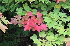 IMG_2347 (sambhensley) Tags: canoneos50d munising mi water falls foliage