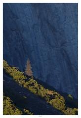Withstand Times (Max Angelsburger) Tags: vereinigtestaatenvonamerika unitedstatesofamerica usa visittheusa us westcoast california yosemite september 2018 national park fir elcapitan