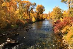 Provo River Fall (arbyreed) Tags: arbyreed fall fallcolors provoriver provocanyon stream utahcountyutah