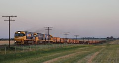 NR44 NR29 and NR83 make their way up the grade on the approach to Murtoa on MP2 (bukk05) Tags: nr44 railpage:class=37 railpage:loco=nr44 rpaunrclass rpaunrclassnr44 nr29 nr83 nrclass nr nationalrail wimmera westernstandardgaugeline wagons explore export engine railway railroad railpage rp3 rail railwaystation railwaystations train tracks tamron tamron16300 trains yarriambiackshire yarriambiack photograph photo pn pacificnational pnsteel loco locomotive landscape horsepower hp ge ge7fdl16 flickr freight diesel station standardgauge sg spring sky sunset smoke 2018 australia artc canon60d canon cv409i steel mp2 mainline murtoa marmalake victoria vr victorianrailway vline victorianrailways indianpacific gsr
