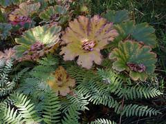 (0000ff) Tags: britzergarten berlin leaves fern autumnfoliage