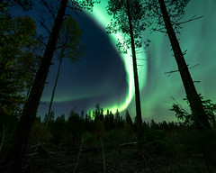 Forest (JH') Tags: wideangel wood wonderful evening explore trees tree tamron outdoor outdoors photoshoot photography auroraborealis aurora autumn sky sweden stars d850 forest field fall green grass landscape longexposure colors beautiful borealis blue nikon nature naturephotograph northernlights night nikond850 nightscape