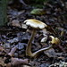 Pilze im Wilhelmsberg