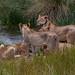 Safari Flickr (133 of 266)