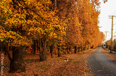 Ready to sleep (Peter Szasz) Tags: hungary berettyóújfalu hajdu hajdúbihar park path peaceful forest trees wood landscape colourful city calm outside fall autumn red brown orange road bark tranquil poles november nature magyarország