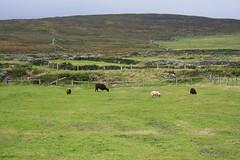 Péninsule de Dingle (Comté du Kerry, Irlande) (bobroy20) Tags: dingle péninsulededingle irlande nature europe eire ireland kerry comtédukerry