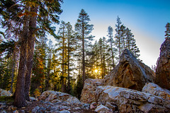 BareIslandLakeTrees7Sept1-18 (divindk) Tags: bareislandlake california maderacounty sierranationalforest backpacking camping lake quiet reflection serene sunrays sunset sunshine treetop trees