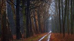 6781727-cool-forest-road-wallpaper (tanyapavlicapschyrembel) Tags: