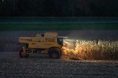 02 Mähdrescher - Harvester A9501075 (NEX69) Tags: ilce9 sigma135mmart sigma135mmf18dghsmart sigmalens sonyalpha9 combineharvester harvester lowlight mähdrescher schweiz switzerland iso8000 newholland tx65