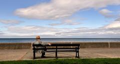 Watching and Waiting (PentlandPirate of the North) Tags: llanfairfechan promenade beach seat dapper man watching waiting bench