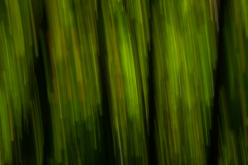 abstract from the forest
