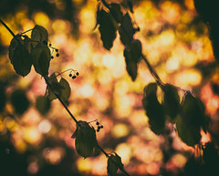where I am paralyzed by the emptiness.. (_elusive_mind_) Tags: nature trees autumn leaves