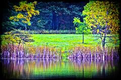 Haunted forest (LotusMoon Photography) Tags: sliderssunday hss forest postprocessed manipulated landscape vividcolor dark trees water pond reflections nature photoshop photomanipulation digital annasheradon lotusmoonphotography awardtree