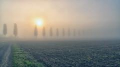 I I    I I O I I I I I (_andrea-) Tags: sonya7m2 sonyzeiss 41670 objektiv outdoor trees allee nebel fog sun sunlight wideangle sunrise