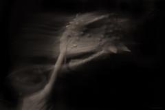 animal instinct (birdcloud1) Tags: intentionalcameramovement icm longexposure monochrome connection trust evolution permianmonsters earlierthandinosaurs scutosaurus permianherbivore theevolutionofkindness recognition relatedness kindred kindness compassionatenature alphaandomega canoneos80d eos80d canon1855mmlens 1855mm amandakeoghphotography amandakeogh birdcloud1 miraclesatthemuseum silverefexpro candid innocenceandexperience gestalt empathy instinct permianmonstersexhibition otagomuseum