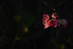 DSC06042 (@saka) Tags: autoupload flowers 73337359 leaves 10791083 street 634637