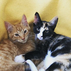 Cute Cats (Christian Gewiese) Tags: instagram travel