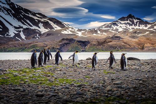 Penguins, Antarctica / SML.20151207.6D.35242