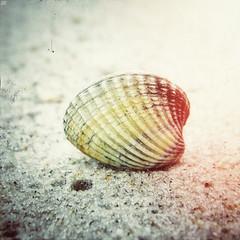 03318552 (aniaerm) Tags: sea coastalfinds sand