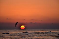 BUON GIORNO ! (Salvatore Lo Faro) Tags: alba mare sole onde risacca rosso nuvole uccello gabbiano volare acqua mareadriatico rodi lidodelsole puglia italia italy salvatore lofaro nikon 7200